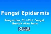 fungsi epidermis