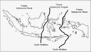 gambar garis wallace dan garis weber