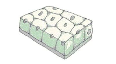gambar-epitel-kubus-selapis