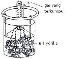 contoh percobaan ingenhousz