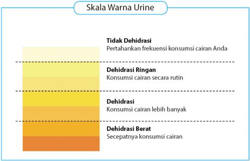 warna urine yang dihasilkan