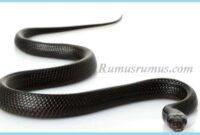 Mimpi di kejar ular