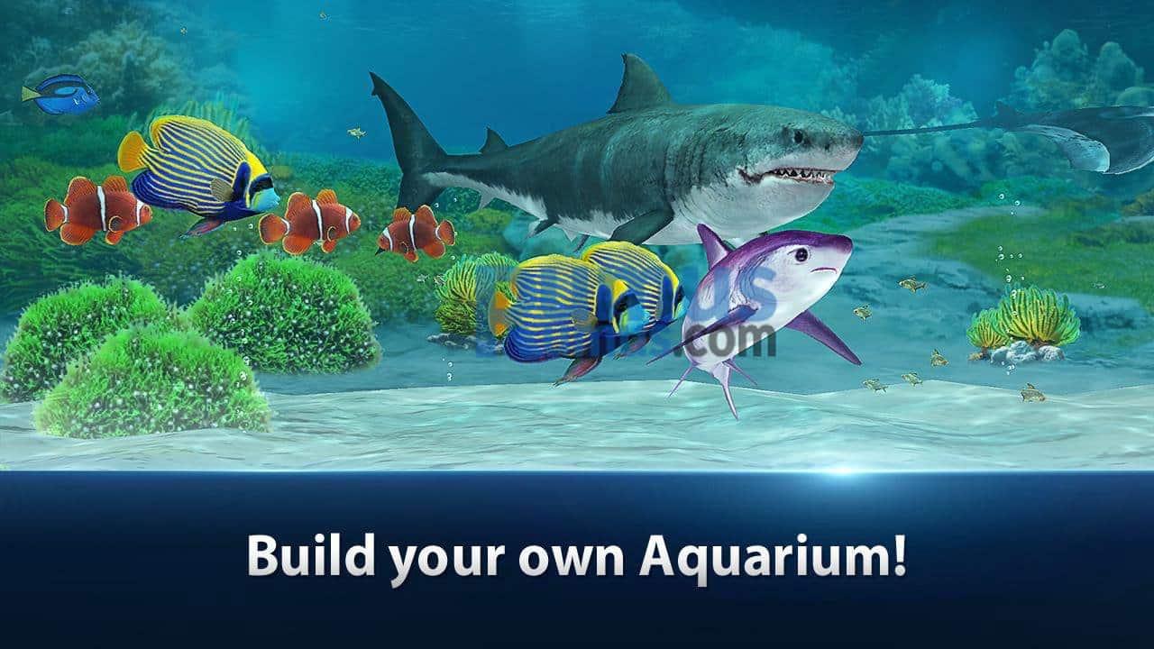 Membangun Akuarium dengan Aksesoris